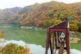 Japanese Train cross the autumn forest - 221410470