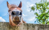 Horses are eating food on a bright day  Face focus of close-up horses