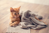 Young cute kitten on blanket - 221423406