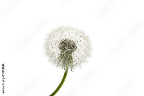 Fototapeta Dandelion close-up. Air beautiful Bud on a light background.