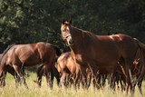 Mare with offspring on the background of trees - 221467042