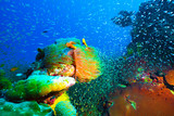 Underwater image of colorful bright corals