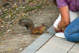 squirrel - 221482825