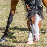 Young Horse in a Field - 221487080