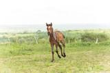 Cavalo Filhote  - 221524818
