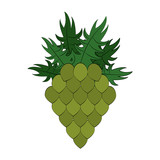 Hop plant isolated - 221527270