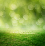 Grass and green meadow - 221545068