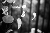 closeup of decorative foliage selective focus bw - 221547238