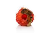 Rotten raspberry on white. - 221572228