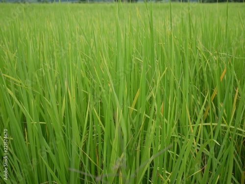 background of green grass - 221574670