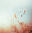 Leinwanddruck Bild - Wild plants at morning foggy sky. Outdoor nature background. Pastel color. Dawning light
