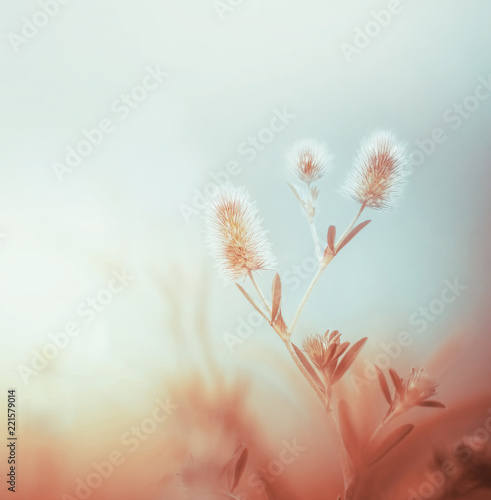 Leinwandbild Motiv Wild plants at morning foggy sky. Outdoor nature background. Pastel color. Dawning light