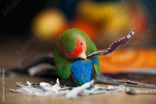 Fototapeta Bird making himself pretty