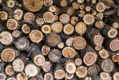 Pile Of Wood Logs Storage For Industry. A Pile Of Cut Tree Trunks Giving A