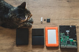 Different types of hard drives disks with different sizes and capacities on a wooden table. A cat stares at them - 221619672
