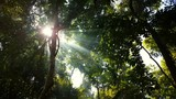 Rays of light passing through rising smoke in the tropical Cambodian Jungle.  - 221627211