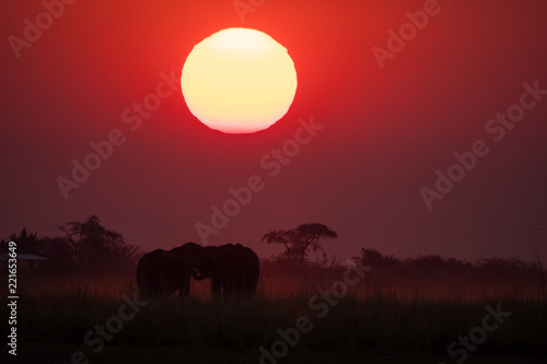 Foto Murales Elephants roaming during sunset in Chobe National Park, Botswana