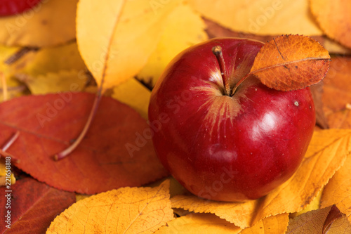 autumn harvest - one red apple is on fallen yellow leaves. Perfect background for autumn season. - 221658818
