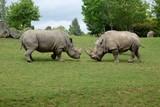 Rhino 2 - 221673085