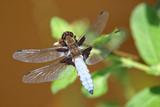dragonfly on a leaf - 221677891