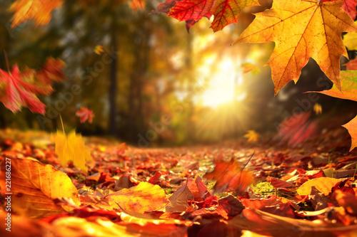 Stimmungsvolle Szene im Herbst mit fallenden Blättern und untergehender Sonne - 221686227