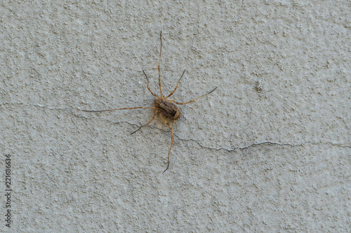 Grosse Spinne an der Hausfassade - 221686636