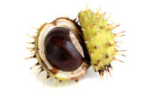 Opened chestnut in a shell on white background - 221702698