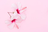 Wellness background with two hibiscus fresh flowers on pink - 221703620