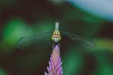 dragonfly on a leaf - 221710673