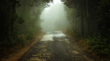 Forest road in a green foggy forest
