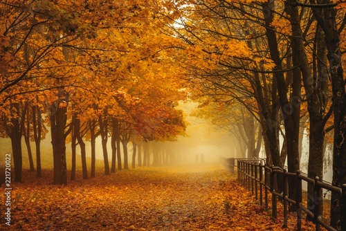 mata magnetyczna Golden autumnal forest with sunbeams