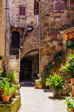 Old courtyard in Pitigliano full of plants - 221730092
