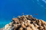 Coral reef underwater - 221740000