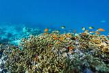 Coral reef underwater - 221740651