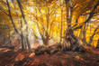 Magical old trees with sun rays at sunrise in fall. Colorful dreamy landscape with foggy forest, gold sunlight, orange foliage. Fairy forest in fog in autumn. Morning enchanted trees with sunbeams