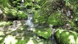 Slow motion beautiful sunny mossy rocks with stream. Dolly slider equipment used. - 221749838