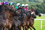 Race horses and jockeys lining up at the start line on the race track - 221755689