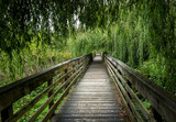 Peaceful wooden boardwalk in the woods, going under a weeping willow tree   - 221768094