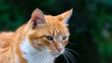 Cute ginger cat on green background - 221769272