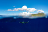 snorkeling with sharks in blue ocean of polynesia