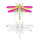 vector, isolated, book coloring dragonfly - 221808661