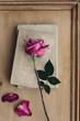 Vintage books with faded pink rose