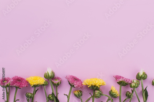 Row of unripe flowers on pink background. Copyspace, free space for text. - 221826897