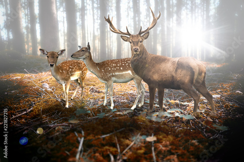 Hirsch und Rehe im Wald