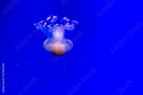 Leinwandbild Motiv abstract background with jellyfish