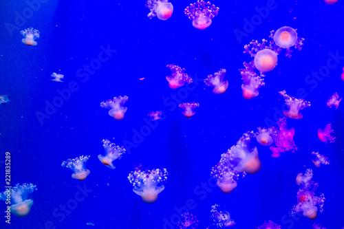 Leinwandbild Motiv abstract background with jellyfishes