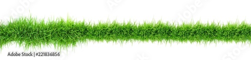 green grass panorama isolated on white - 221836856
