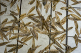 Original natural background of dry bamboo leaves scattered by the wind and rain on a granite terrace. Nature concept for design.