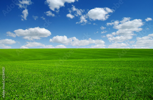 Foto Murales green field and clouds
