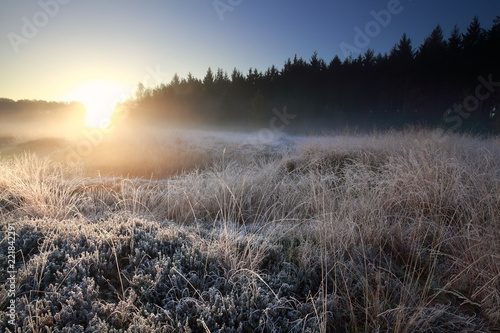 sunrise light over forest frosed meadow